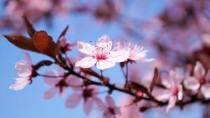 spirituele groei, coaching, readings